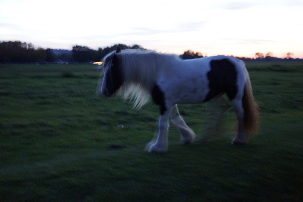 A horse grazing on Port Meadow, ancient common land in Oxford. Common land is one form of anticapitalism.